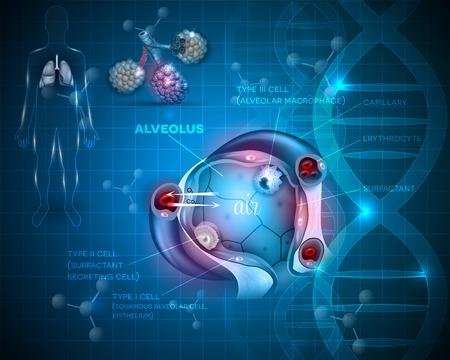 alveolos: órganos sistema de respiración. Los pulmones y el primer plano de intercambio alveolo abstracta fondo científica, oxígeno y dióxido de carbono entre los alvéolos y los capilares, el mecanismo de respiración externa.