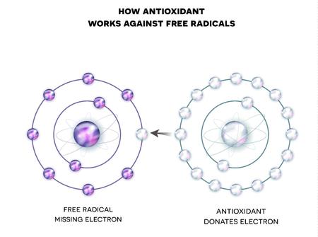 Cómo funciona el antioxidante contra los radicales libres. El antioxidante dona el electrón faltante al radical libre, ahora todos los electrones están emparejados. Ilustración de vector