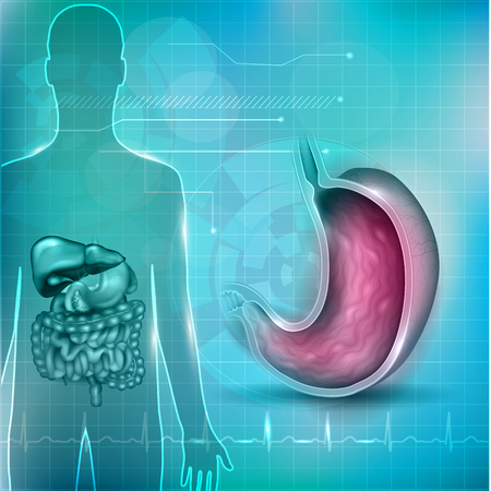 intestinal mucosa: Stomach cross section anatomy and surrounding organs and normal cardiogram at the bottom, abstract technology background Illustration