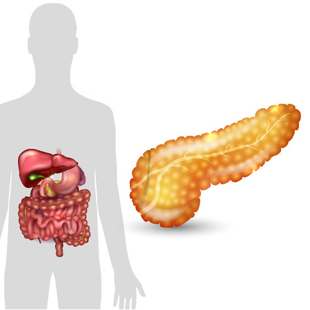 common bile duct: Pancreas anatomy and human silhouette with internal organs, gallbladder, intestine, stomach and spleen on a white background