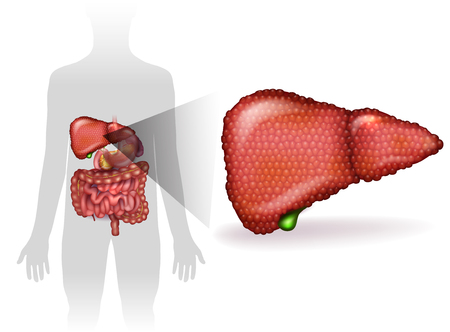 Liver disease anatomy illustration, variety of illnesses can affect the liver- cirrhosis, alcohol abuse, hepatitis. Human silhouette with internal organs at the background