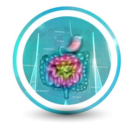 Gastrointestinal tract icon bright colorful illustration. Illustration