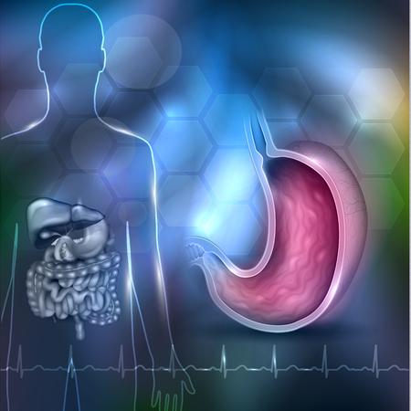 Stomach health care 3d illustration design abstraite, silhouette humaine avec organes internes et cardiogramme normal au fond