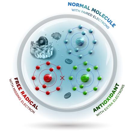 Trzy molekuły wewnątrz komórki ludzkiej: Wolna rodnik z brakującym elektronem, Normalna stabilna cząsteczka z połączonymi elektronami i przeciwutleniaczem z dodatkowymi elektronami, które można podarować do wolnych rodników