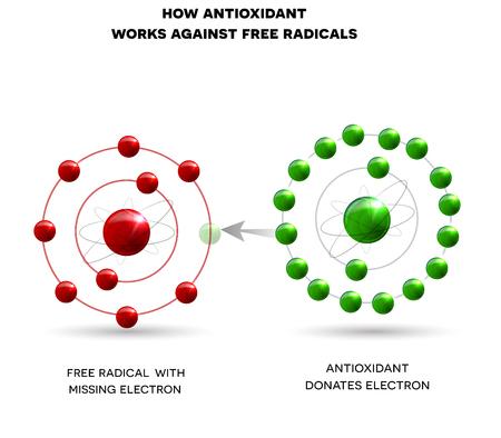 How antioxidant works against free radicals. Antioxidant donates missing electron to Free radical Illustration