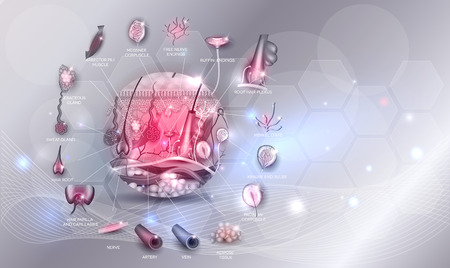 Skin anatomy in the round shape artistic design, detailed illustration on an glowing background