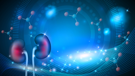 Nieren 3d illustratie abstracte blauwe wetenschappelijke achtergrond