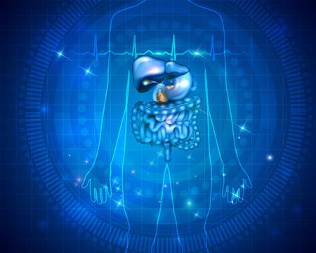 Maagdarmkanaal, lever, maag en andere omliggende organen, gedetailleerde kleurrijke tekening op een abstracte blauwe achtergrond en normaal cardiogram aan de voorkant