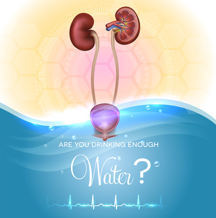 Health care poster. Are You drinking enough water? Water drinking affects urine color. Kidneys and urinary bladder detailed anatomy. Normal cardiogram at the bottom.