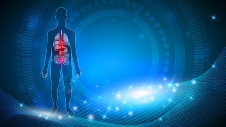 Anatomie des organes internes humains Illustration