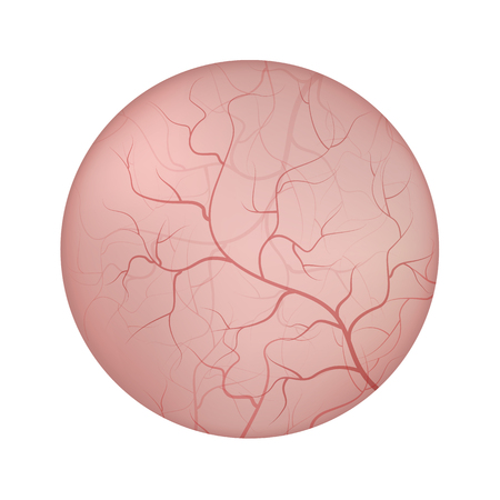Urinary bladder interior lining closeup illustration. Illustration