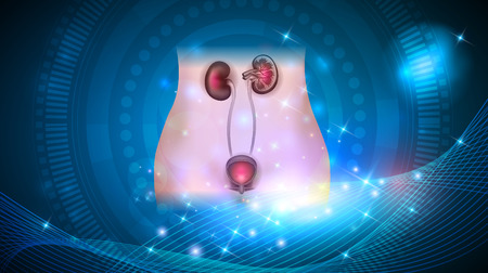 Kidneys and urinary bladder health care on a glowing abstract background Çizim