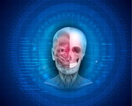 Muscles and bones of the face detailed bright anatomy with names of muscles and bones on a blue abstract background