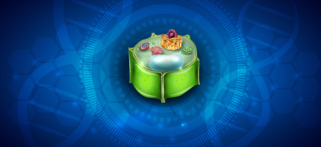 Plant Cell structure, cross section of the cell detailed colorful anatomy on an abstract blue science background