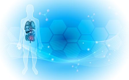 Detaillierte Illustration der Anatomie des menschlichen inneren Organs auf einem abstrakten blauen Hintergrund mit Glühen