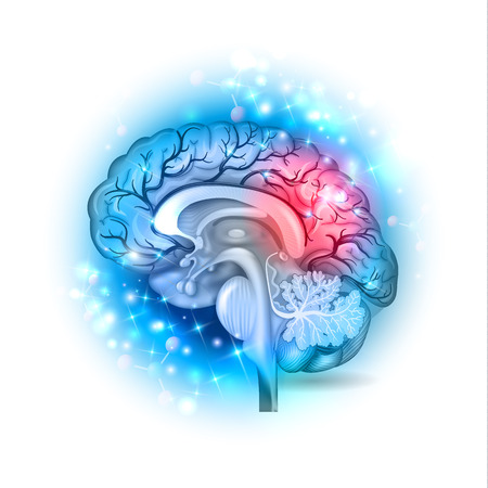 Human brain on a beautiful light blue sparkling background