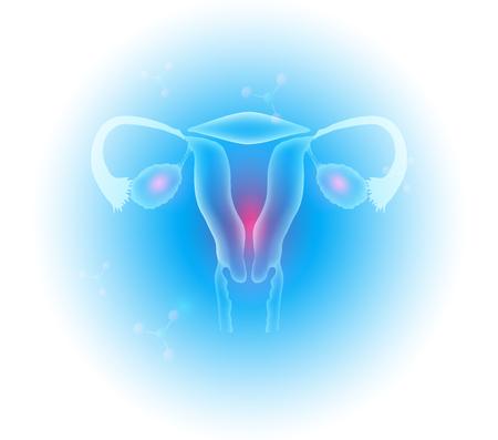 Weibliche Fortpflanzungsorgane Gebärmutter und Eierstöcke schönes transparentes Design Vektorgrafik