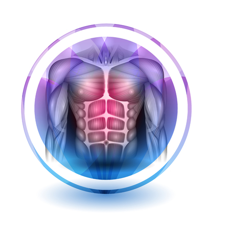 Muscles of the human body, abdomen, chest and arms, beautiful colorful icon Illustration