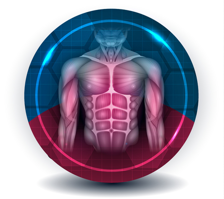 Fit body muscles, torso and arms, beautiful colorful icon