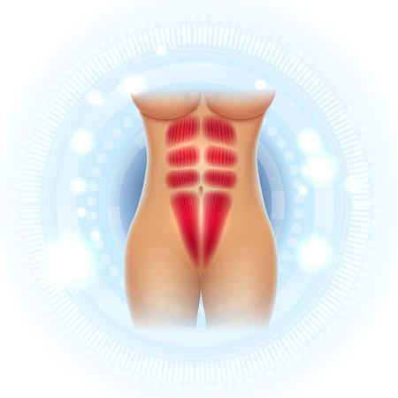 Les muscles abdominaux féminins pack de six corps en forme magnifique sur un fond bleu clair étincelant Vecteurs