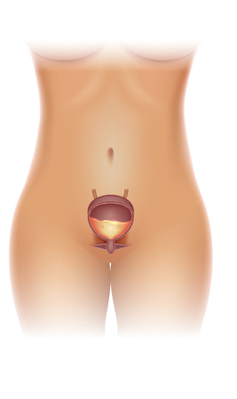 Urinary bladder detailed illustration and female silhouette on a white background