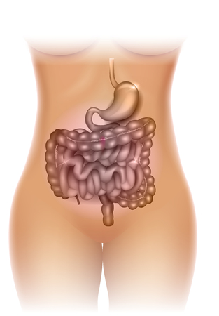 Stomach and colon illustration, beautiful woman silhouette Stock Illustratie