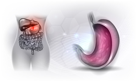 Diseño brillante de la sección transversal de la anatomía del estómago sobre un fondo gris claro
