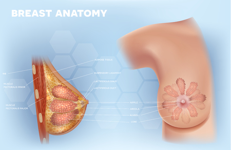 Female Breast anatomy structure detailed colorful illustration on a light blue abstract background Stock Illustratie