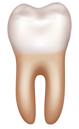 Healthy tooth illustration on a white background