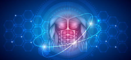 Human body Muscles, healthy lifestyle and fitness abstract scientific background