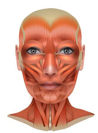 Structure musculaire du visage et du cou féminins, anatomie lumineuse détaillée isolée sur fond blanc