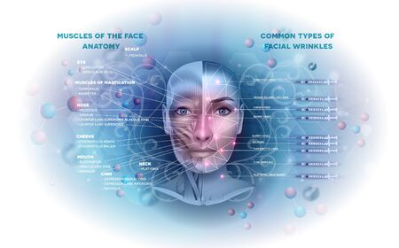 Facial muscles anatomy info and common types of facial wrinkles treatment areas on a beautiful  light blue abstract background Иллюстрация
