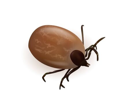 Tick illustration on a white background Иллюстрация