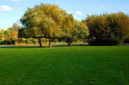 country park: green trees of a park at summer or autumn under blue sky