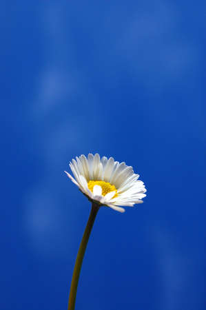 happieness: happy daisy flower under blue spring sky