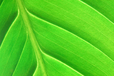 texture or structure of a green leaf photo