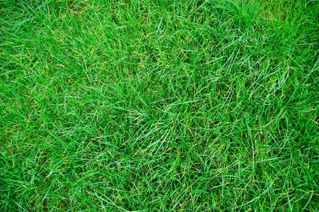background textures: green grass texture on a meadow or grassland