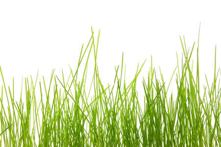 green summer grass isolated on white background photo