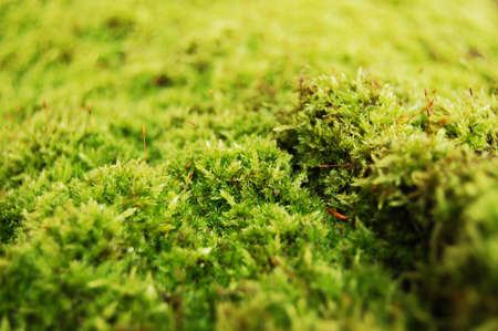 dosh: fresh green dosh in the forrest at fall or autumn Stock Photo