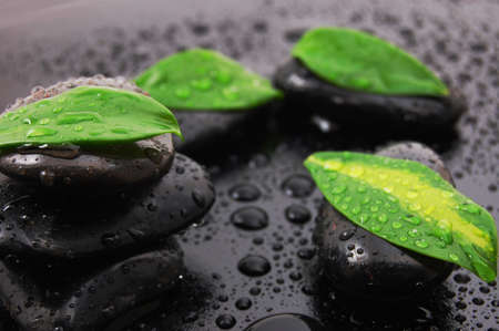 wellness concept with zen stone and green leafs Stock Photo - 4583246