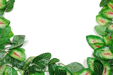 border of leaves isolated on white background photo