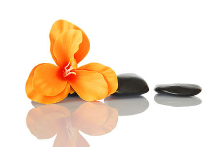 flower isolated on white background showing spa and wellness still life