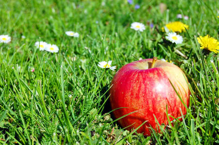 red apple fruit in summer on green grass with flowers Stock Photo