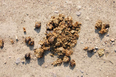crap or shit from a horse on a agriculture farm photo