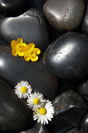happy daisy flowers on black stone background showing health and wellness concept photo