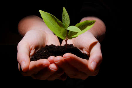 life growth: young plant in hands showing concept of environment and growth