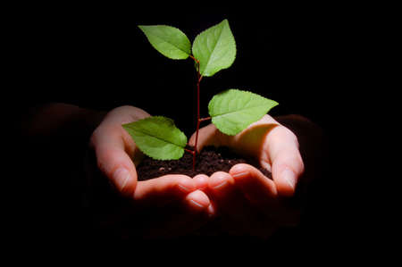 sustain: hands plant and soil showing concept of growth Stock Photo