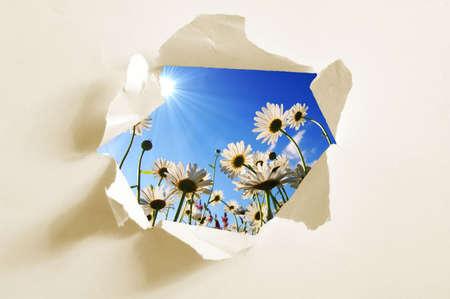 descubrir: flor detr�s de agujero en papel en blanco que muestra la libertad Foto de archivo