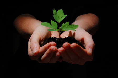 sustain: young plant in hands showing concept of environment and growth