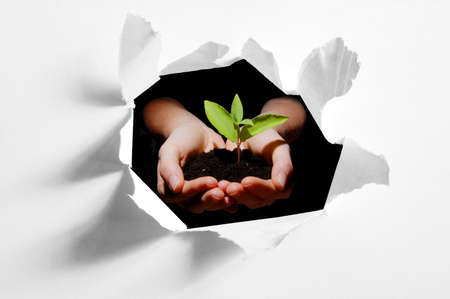 environmental damage: hole in paper and plant in hands showing concept of ecology and growth